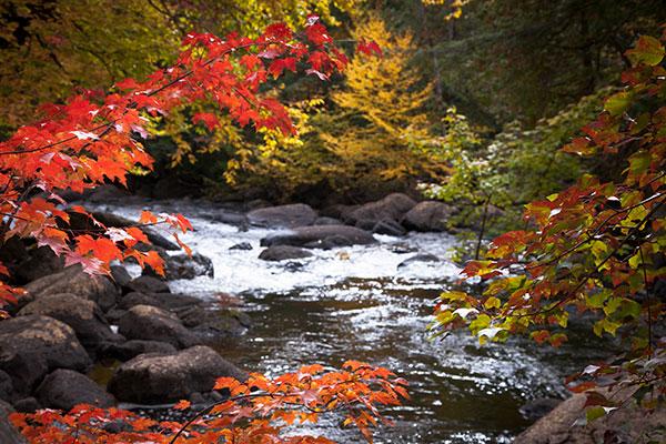 fall-photo-br