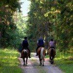 horseback-laurentians
