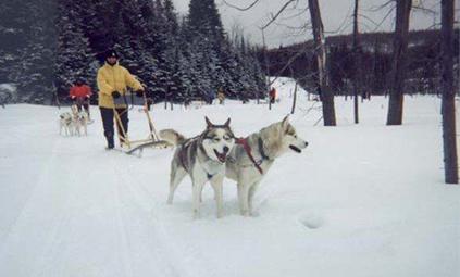 Dog Sledding In Winter